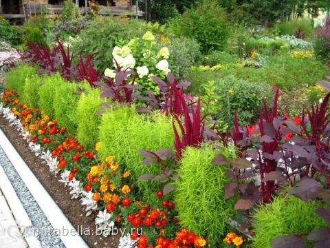 Садовые растения и уход